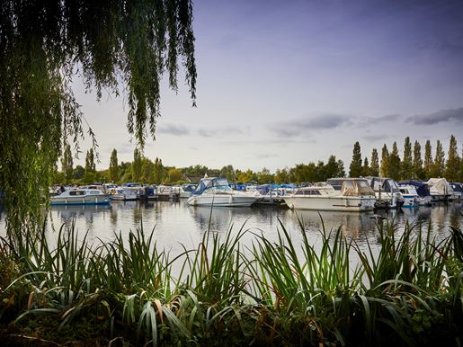 Trees in foreground with boats on the water at Sawley Marina